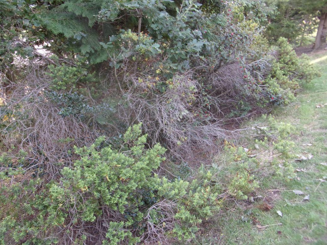 Clearing brush Sept 2020 (4).JPG