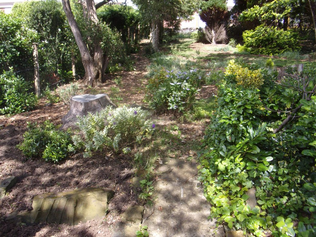 Overgrown (4).JPG