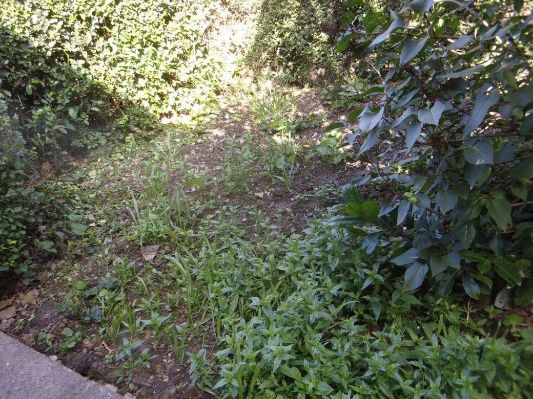 Side garden..JPG