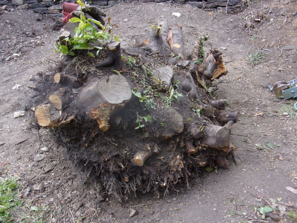 Stump removal May 2020 (1).JPG