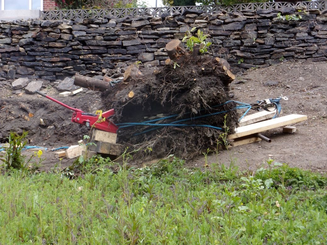 Stump removal May 2020 (10).JPG